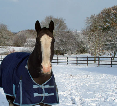 Guinness in the snow 2010!